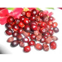Palma sabałowa owoc 50g cały Układ moczowy NANGA